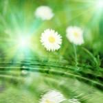אנרגיה ירוקה בארהב